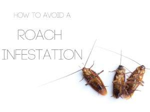 Roach infestation Critter Control Ft. Worth