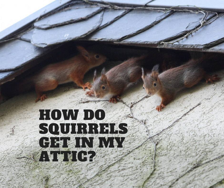 CC Ft  Worth- How Do Squirrels Get In My Attic- SEPT