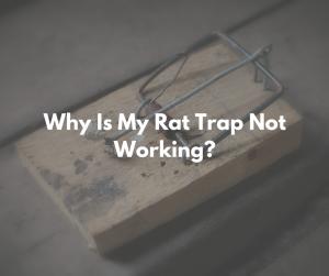 Rat trap not working