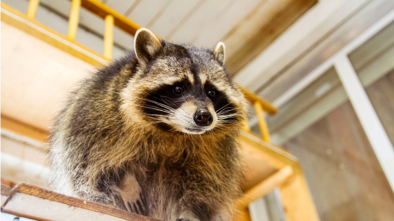 How to Keep Critters from Living Under Your Porch