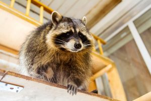 Keep Critters from Under Your Porch