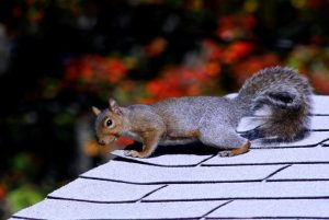 4 Squirrel Prevention Tips