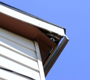 Reasons to Have Your Attic Inspected